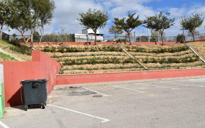 Mejoras de jardinería en el talud del recinto ferial de Taraguilla, donde también se han plantado cocoteros